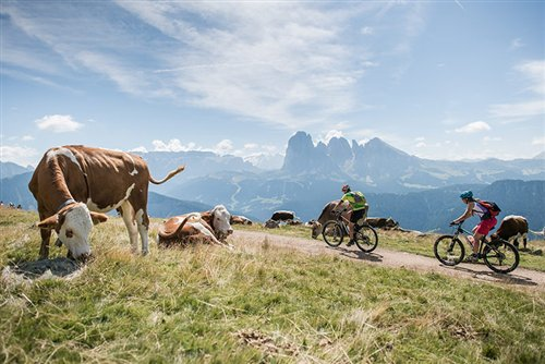 Moutain bike sulle malghe