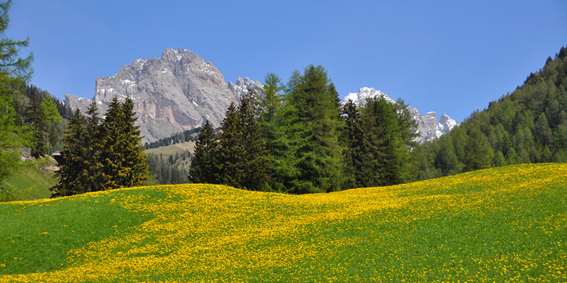 June in the Dolomites – week package